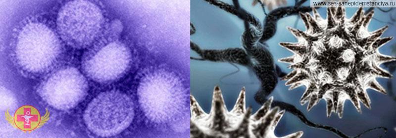 Дезинфекция бактерий