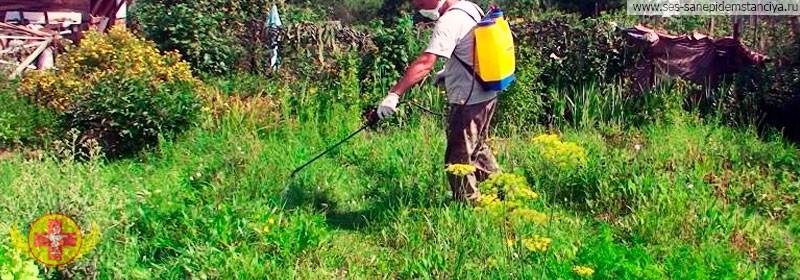Стоимость обработки участка гербицидами