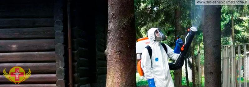 Травить жука короеда
