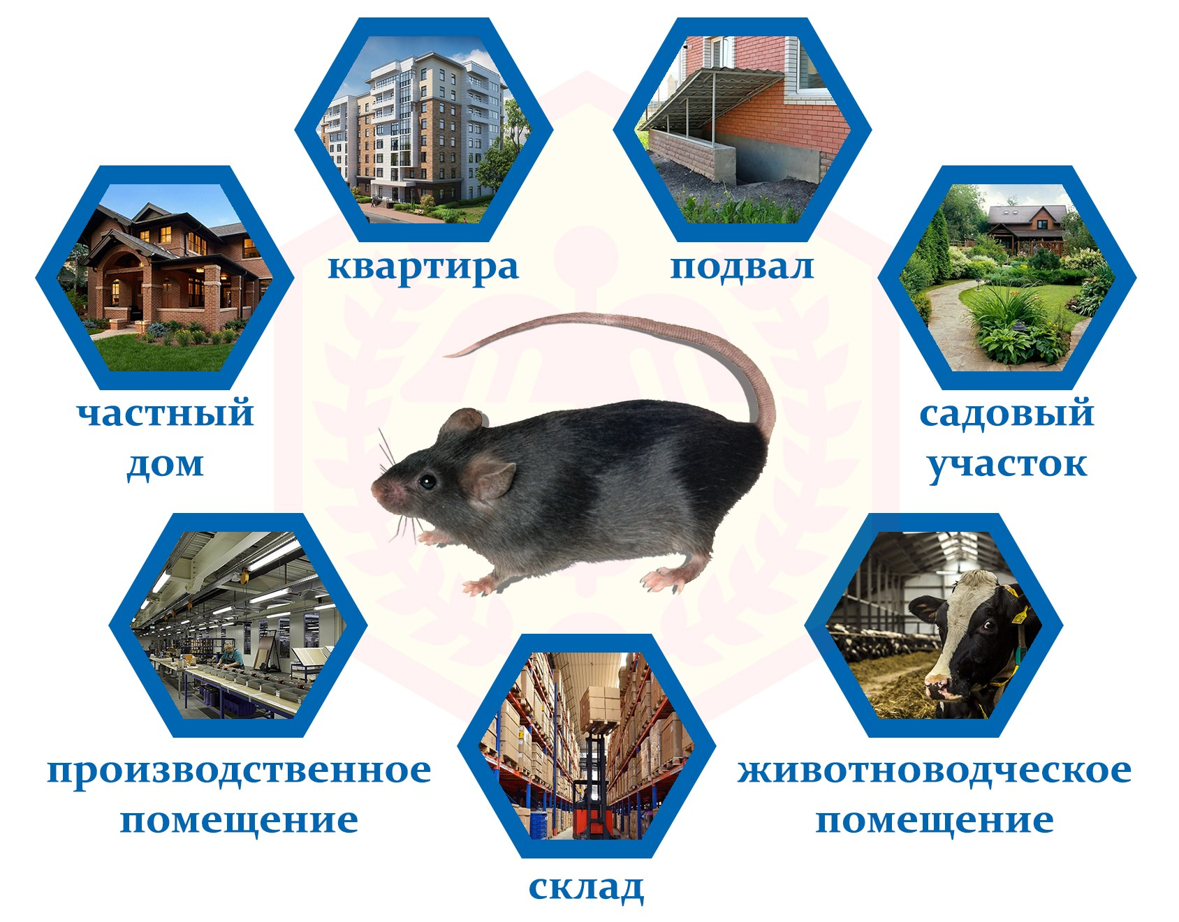 Места обитания мыши