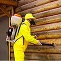 fumigaciya-drevesiny